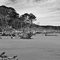 Hunting Island  by Bill Hosford