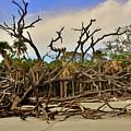 Hunting Island Driftwood Beach Beaufort Sc by Lisa Wooten