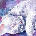 Hushabye Kitten by Sherry Shipley