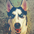 Husky Modern by Angela Doelling AD DESIGN Photo and PhotoArt