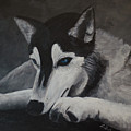 Husky Resting by Laurel Best