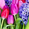 Hyacinth And  Tulip Flowers by Anastasy Yarmolovich