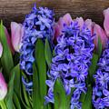 Hyacinths And Tulips II by Anastasy Yarmolovich
