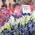 Hyacinths by Diane Wallace