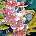 Hybrid Orchids Orchid Flowers by Derek Mccrea