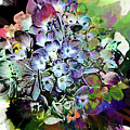 Hydrangea Abstract by Kay Brewer