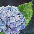 Hydrangea And Water Droplet by Katherine  Berlin