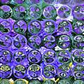 Hydrangea Bubbles by Donna Bentley