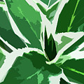 Hydrangea by Gina Harrison