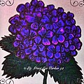 Hydrangea by MaryLee Parker