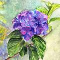 Hydrangea On Clayboard by Katherine  Berlin