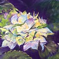 Hydrangea by Rebecca Matthews