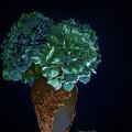 Hydrangea by Susan Heath