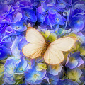 Hydrangea With White Butterfly by Garry Gay