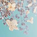#hydrangeas #becauseiamhappy #flowers by Tricia Elliott