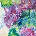 Hydrangeas by Diane Wallace