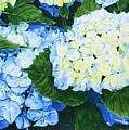 Hydrangeas by Frank Hamilton