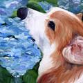 Hydrangeas by Mary Sparrow