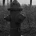 Hydrant by Sara Stevenson
