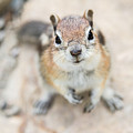 Hypno Squirrel by Chris Scroggins