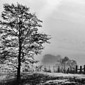 I-40 Fog by Carolyn Fletcher