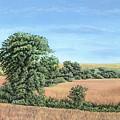 I-74 Soybean Field by Craig Carlson
