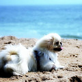 I Am King Of This Beach by Ania M Milo