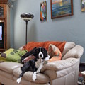 I Am Not A Couch Potato. I Am A Couch Dog by Anne-Elizabeth Whiteway
