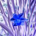 I Am So Blue by Darrell Clakley