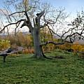 I Am Such A Tree. by Elena Perelman
