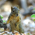 I Ate Too Many Nuts by Donna Blackhall