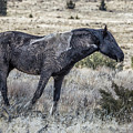 I Don't Mind Getting Dirty by Belinda Greb