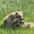 I Got Your Back - Bear Cubs, No. 4 by Belinda Greb