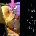 I Had A Ruff Day Printable by Domenique Martinez