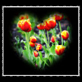 I Heart Tulips - Black Background by Bill Cannon