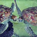 I Kissed A Turtle And I Liked It by Ariane Moshayedi