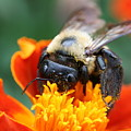 I Like Pollen  by Jason Hochman
