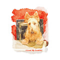 I Love My Scottie by Image Takers Photography LLC - Carol Haddon