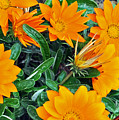 I Love Orange Flowers by Lydia Holly
