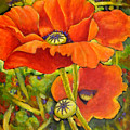 I Love Poppies by Eileen  Fong