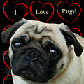 I Love Pugs With Hearts by Patricia Barmatz