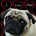 I Love Pugs With Hearts by Patricia Barmatz