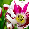 I Love Spring by Debra Orlean