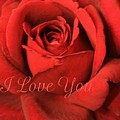 I Love You Rose by Marna Edwards Flavell
