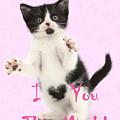 I Love You This Much Valentine Kitten by Warren Photographic