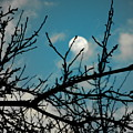 I See The Moon by Trudi Southerland
