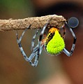 I See You Spider by Kathryn Colvig
