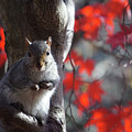 I See You Too by Barbara Swinton