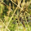 I Spy A Dragonfly by Belinda Greb