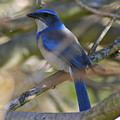 I Think I Found The Blue Bird Of Happiness by Kerry Reed